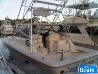 Sea Ray Cabo Luhrs Tiara Pursuit Amberjack