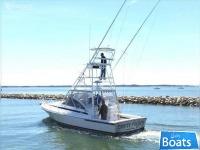 Blackfin 33 Combi