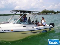 Sea Cat Cabin Cruiser
